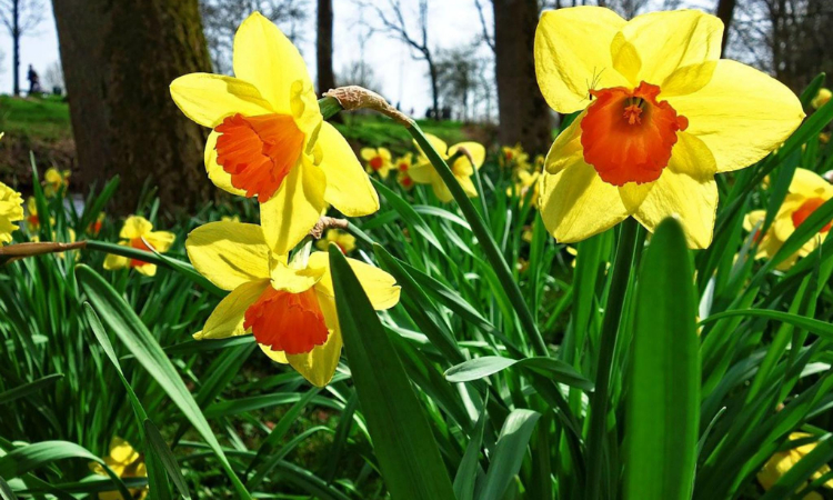 Top Tips for Selling Your Cheshire Home This Spring